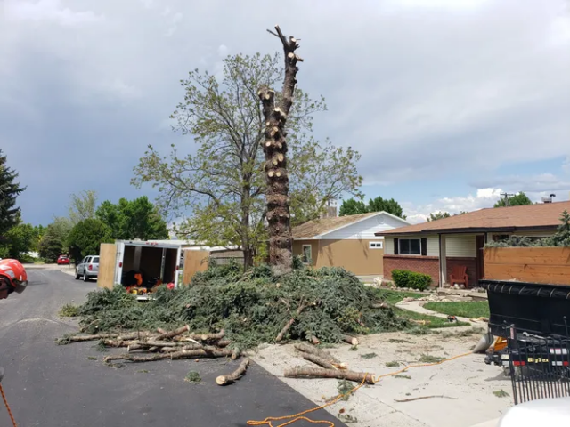 Timber Ridge Tree Service Tree Removal