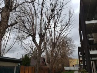 Residential and Commercial Tree Trimming