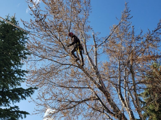 Timber Ridge Tree Service Broken Branch Removal Salt Lake Ctiy, Utah
