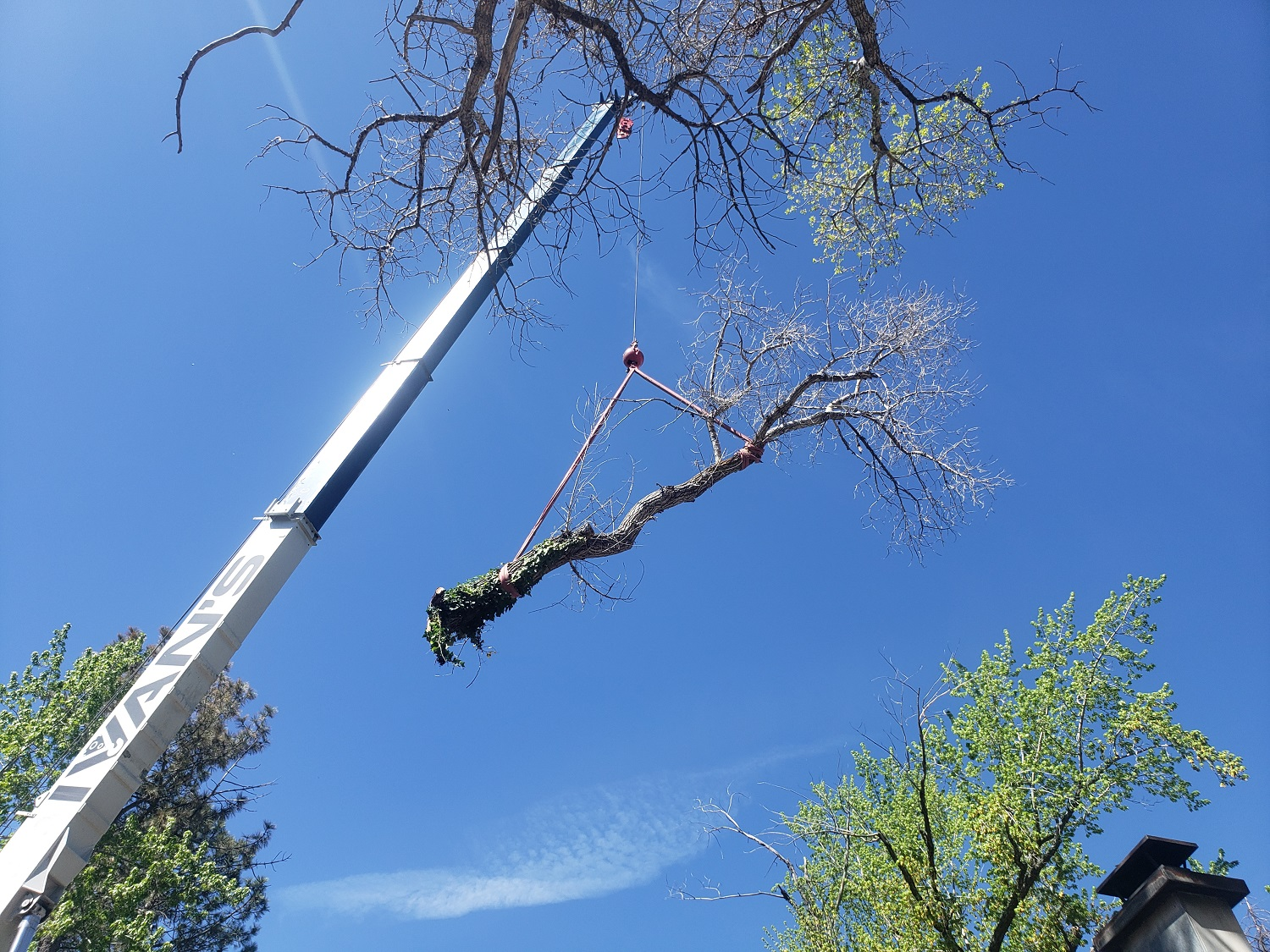 Timber Ridge Tree Service Crane Assisted Large Tree Branch Removal Utah