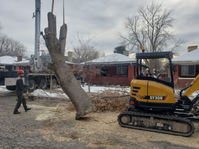 Timber Ridge Tree Service Large Tree Crane Removal Salt Lake City, Utah