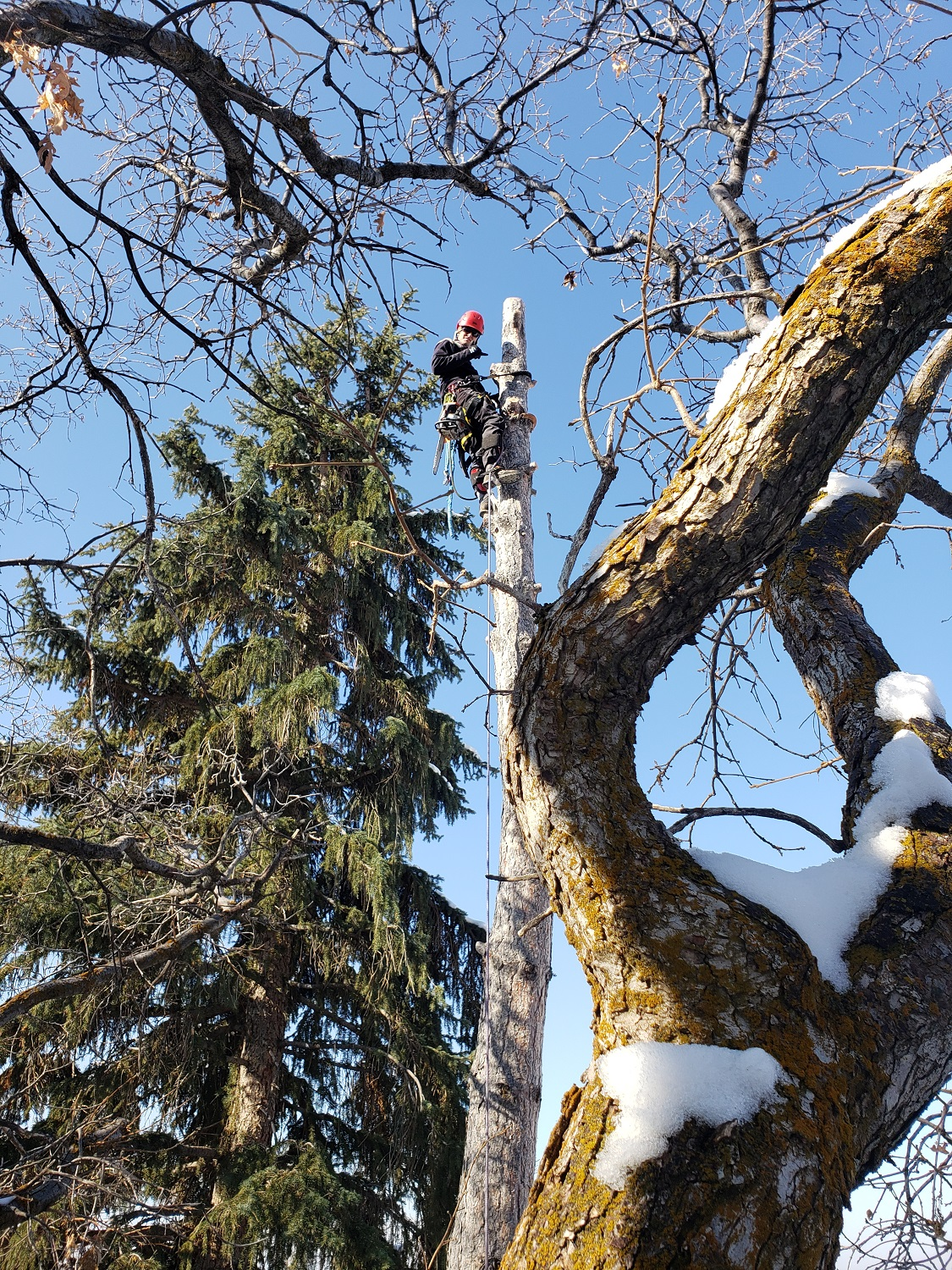 Timber Ridge Tree Service Large Tree Removal Salt Lake City, Utah