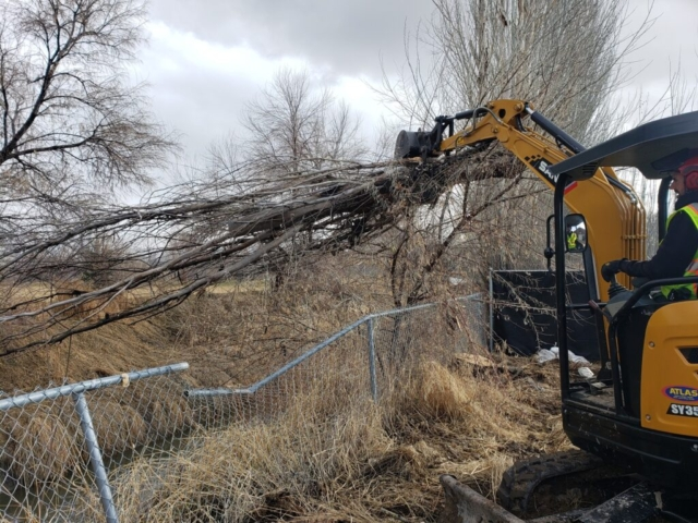 Timber Ridge Tree Service Tree Debris Removal Salt Lake City, Utah