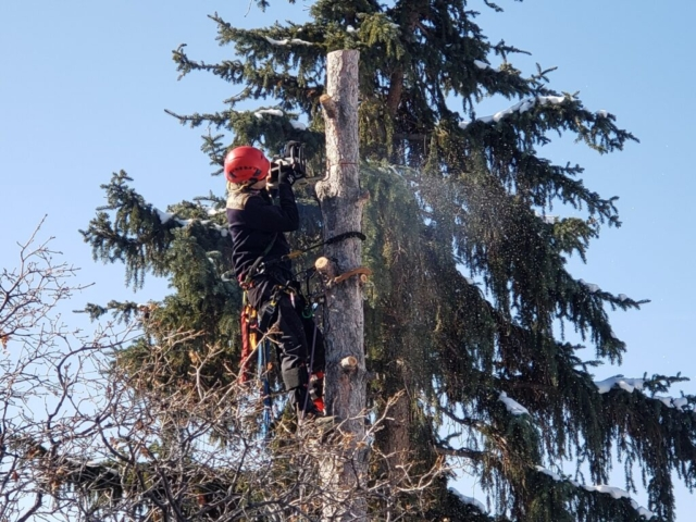 Timber Ridge Tree Service Tree Removal Sandy, Utah
