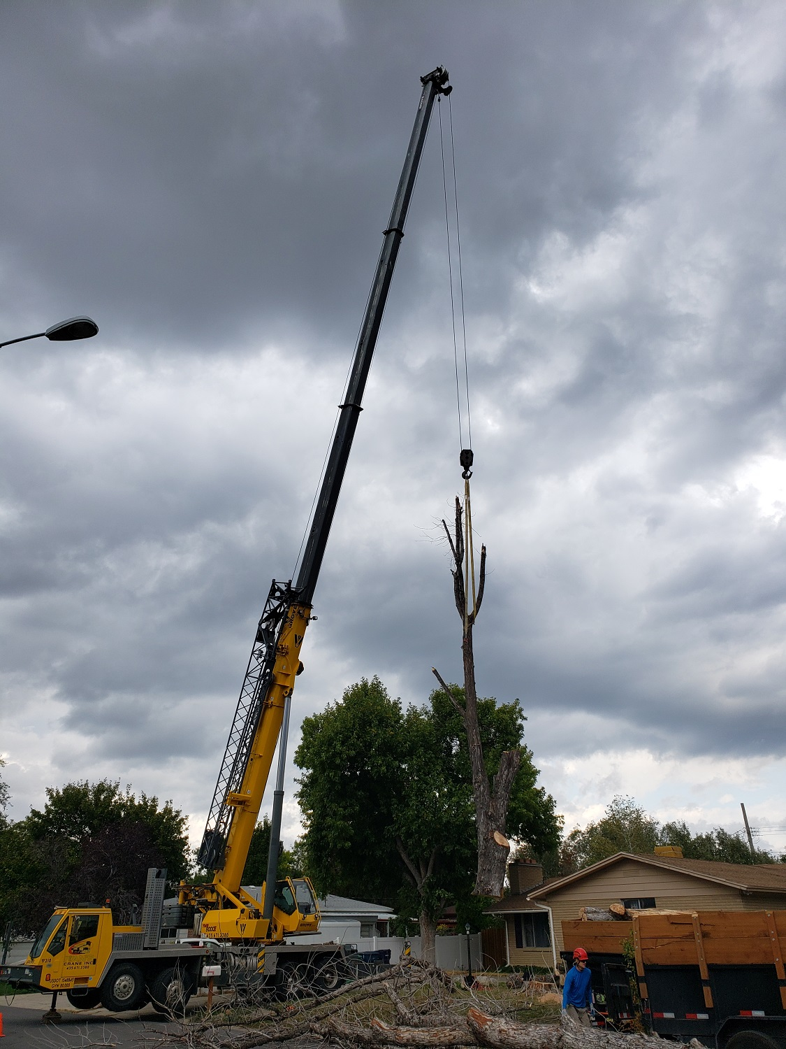 Timber Ridge Tree Service Tree Removal with Crane
