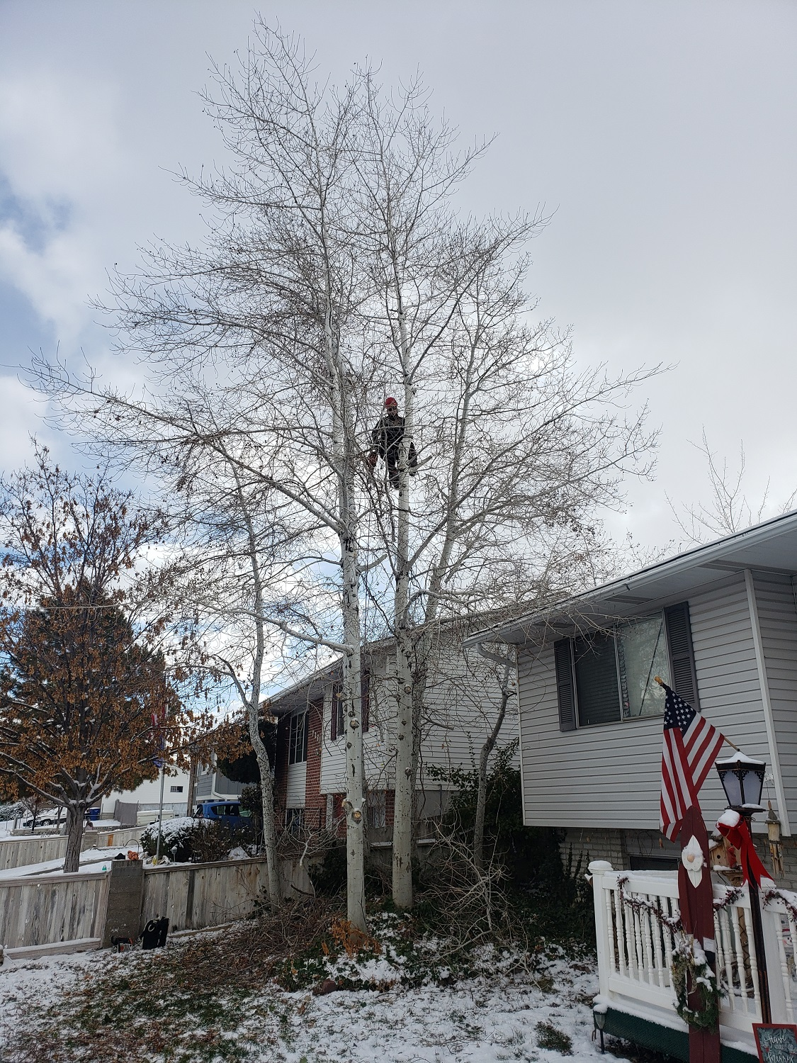 Timber Ridge Tree Service Tree Trimming Riverton, Utah