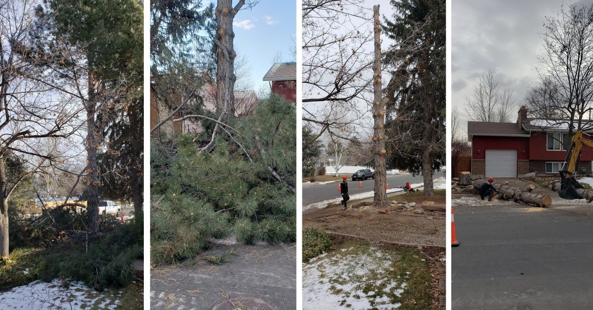 Large Residential Tree Removal Services in Sandy, Utah