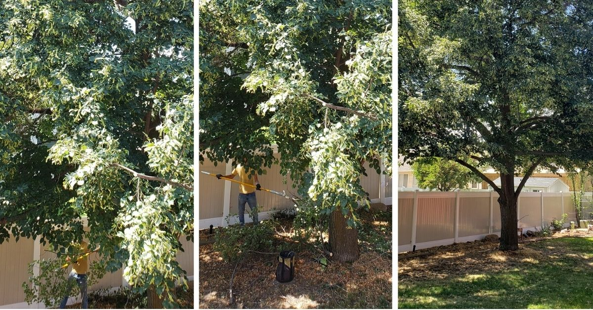 Residential Tree Trimming in Sandy, Utah