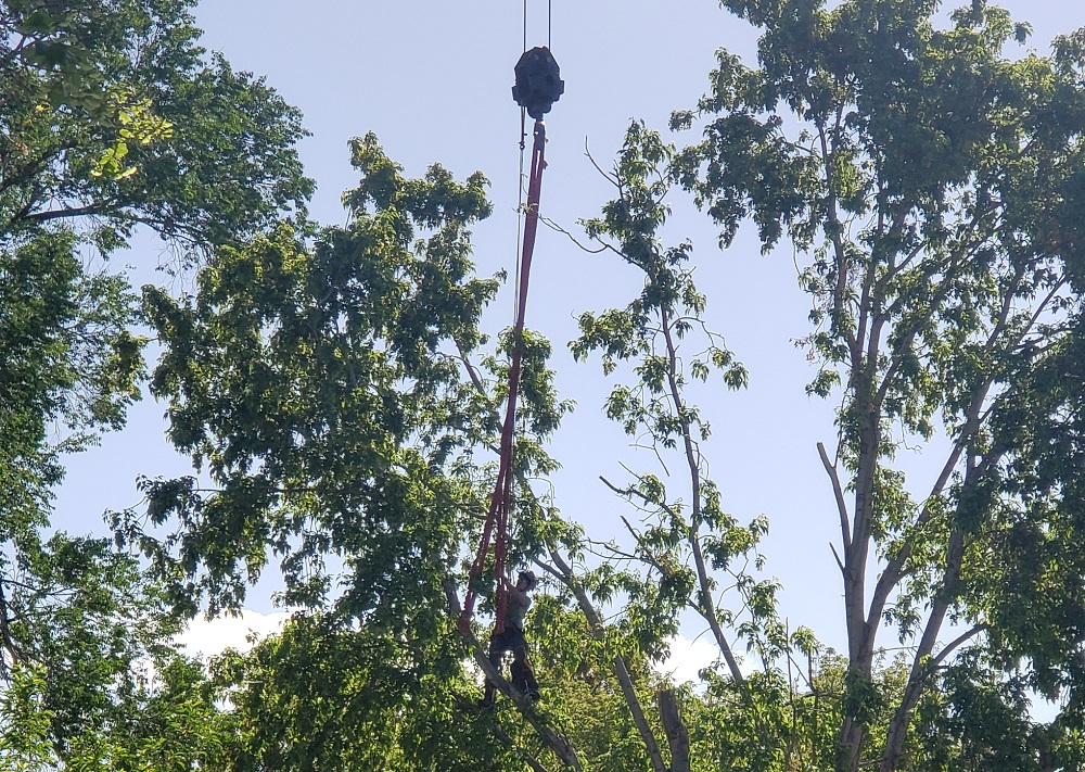 Safely Removing A Large Tree With A Crane