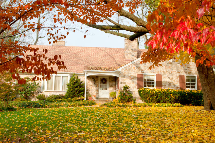 Shade Trees for Your Yard